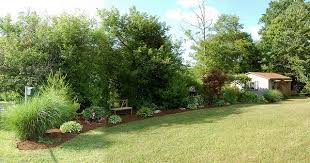 Tree Ideas For Backyard Trees Or Bushes For Privacy Fence Trees Mixed With Shrubs
