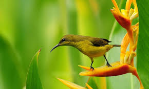 lovely spring bird wallpapers 1280x768 179904