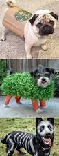 Halloween Costume Ideas For Pets Best 50 Funny Pets Halloween Costumes Ideas Ever Funny Dog