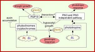 What Is Growth Movement Of A Plant Toward Light Called Plant Development Introduction