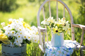 Pictures Of Garden Flowers by Free Stock Photo Of Daisies Flowers Garden