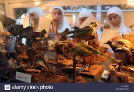 kashmiri school students examine at a museum in kashmir india on