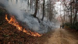 Wildfire Deaths Per Year by Inside The Midwest Wildfires That Burned Cattle Alive