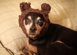 Ewok Dog Halloween Costume Google U0027s 10 Pet Halloween Costume Searches
