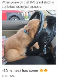 Puppy Memes - when you re on that 9 5 grind stuck in traffic butyou re just a