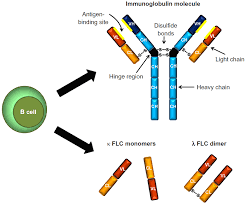 Full Text Polyclonal Free Light Chains Promising New Biomarkers In