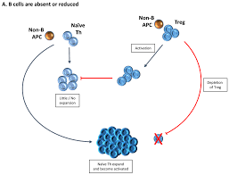 jcm free full text mechanisms by which b cells and regulatory