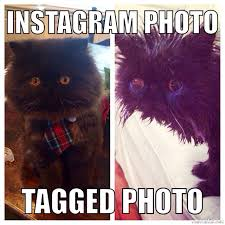 Persian Cat Meme - persian cat meme persiancat instagram funny funnymeme cats