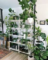 How To Arrange Indoor Plants by Best 25 Plant Shelves Ideas Only On Pinterest Bathroom Ladder