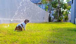 Best Patio Misting System Top 5 Best Misting Cooling Systems For Dogs In 2017