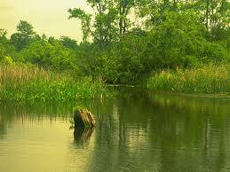 my free wallpapers nature wallpaper green river