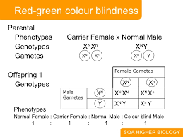 Pedigree Chart For Color Blindness 1 Meiosis And Dihybrid Cross