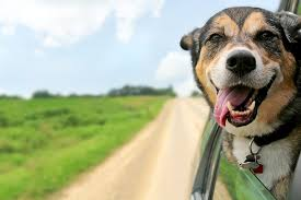 Discover the three essential dog travel accessories trucking