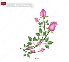 rose flowers the popular flower of maldives u2014 图库矢量图像