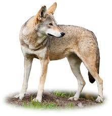 information about dogs dog facts for kids dk find out
