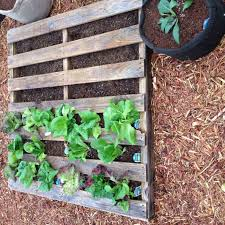 creative recycle growbags for indoor ing in pots creative pallet