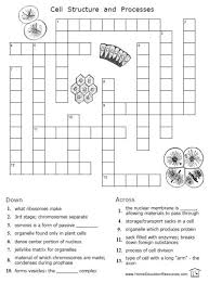 free cells worksheets 12 pages easy to download from