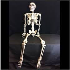 posable halloween skeleton deluxe life size halloween skeleton mad about horror
