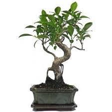 garden trees ebay