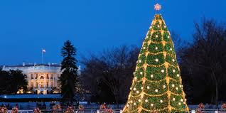 america u0027s best public christmas trees huffpost
