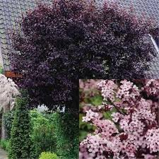 42 best landscaping trees images on flowers garden
