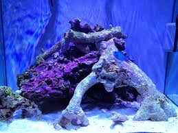 Reef Aquarium Lighting 8 Things You Should Never Do When Starting A New Reef Aquarium