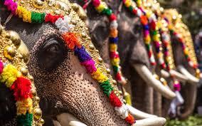 new documentary exposes abuse of india u0027s u0027sacred u0027 elephants