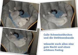 Gute Und G Stige K Hen Katzenhilfe Krummhörn E V Archiv Tagebuch Der Ostfriesenbande