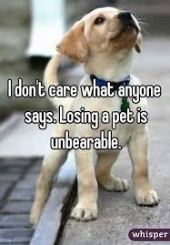 Lost Dog Meme - losing a pet is unbearable love pinterest dog animal and