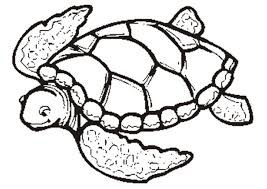 coloring pages pretty turtle coloring sheet detailed 255x300
