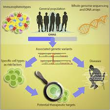 genetic variants regulating immune cell levels in health and