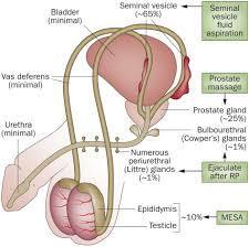 system organ anatomy organ system spm biology form 4 form 5