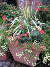 Outdoor Potted Plants Full Sun by Refresh Your Container Garden This Summer Hgtv