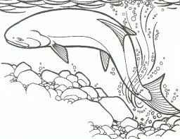 coloring pages of animals in their habitats kids u0027 species information chinook salmon