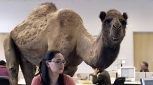 Hump Day Camel Meme - hump day vs state farm jake in the battle of youtube memes