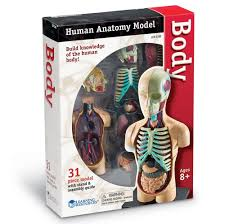buy learning resources human body model online at low prices in