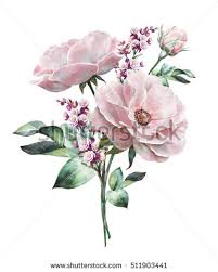 Meaning Of Pink Roses Flowers - flower stock images royalty free images u0026 vectors shutterstock