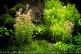 Aquascape Tree Nature U0027s Chaos Aquascape By James Findley Journal The Green