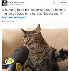 Gato Meme - 18 reclama礑禝es engra礑ad祗ssimas do gato que conquistou a internet