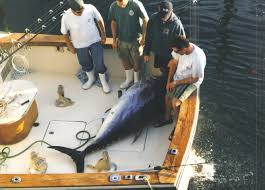 bluefin tuna fishing pictures