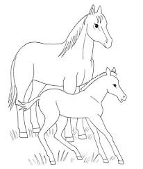 horse foal coloring free printable coloring pages