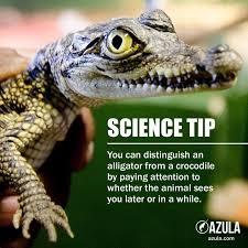 Crocodile Meme - memebase alligator all your memes in our base funny memes
