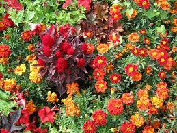 floral arrangement ideas creative diy flower arrangements idolza