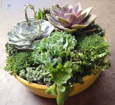 diy succulent 67 diy succulent planter ideas everyone can try morflora