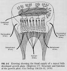 Normal Bone Anatomy And Physiology 02f2 Jpg