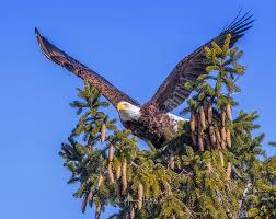 friday feathered feature u2014 madison audubon