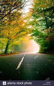 autumn landscape with a beautiful road with colored trees stock