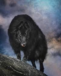 belgian sheepdog available belgian sheepdog art 3 photograph by wolf shadow photography