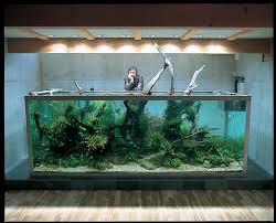 tank philosophy aquariums fish and fish tanks