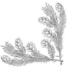 pine cone corner lower right clipart etc